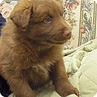Adopt A Pet :: Chandler - Wickenburg, AZ