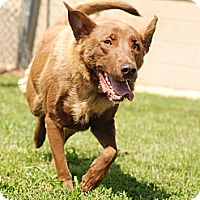 Adopt A Pet :: Honey Bun - Homewood, AL