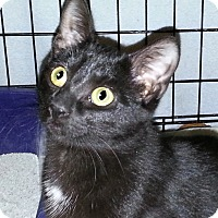 Adopt A Pet :: Rue - Sunderland, ON