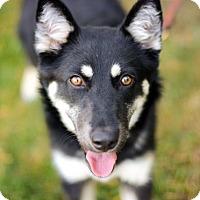 Adopt A Pet :: Shiva - Mission Viejo, CA