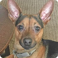 Adopt A Pet :: Jack - North Olmsted, OH