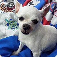 Adopt A Pet :: Adopted!!~ Lil girl - Troy, OH