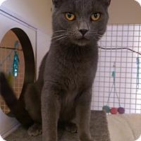 Adopt A Pet :: Lonnie - Bridgeton, MO