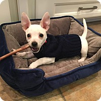 Adopt A Pet :: Peanut - Warsaw, IN