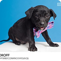Adopt A Pet :: Moroff - Ogden, UT