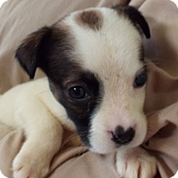 Adopt A Pet :: Selene - Grants Pass, OR