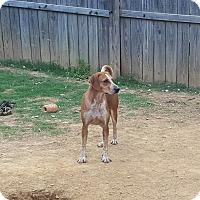Adopt A Pet :: Cindrella - Byhalia, MS