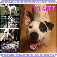 Adopt A Pet :: Claire - Hearne, TX