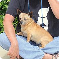 Adopt A Pet :: Willa - Yuba City, CA