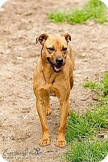 Labrador Retriever Mix Dog for adoption in Conway, South Carolina - Luz