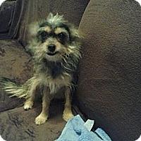 Adopt A Pet :: Lucy (Courtesy Listing) - Sylvania, GA