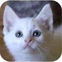 Adopt A Pet :: Sarov - Lombard, IL