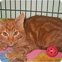 Adopt A Pet :: Sam - Shelton, WA
