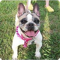 Adopt A Pet :: Abbie - Ooltewah, TN