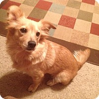 Adopt A Pet :: Dixie - Conway, AR