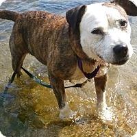 Adopt A Pet :: Mattie - Richmond, VA