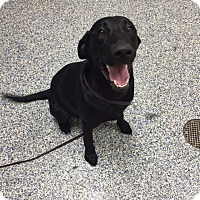 Adopt A Pet :: Zoey - Rochester/Buffalo, NY