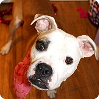 Adopt A Pet :: Priya - Toledo, OH