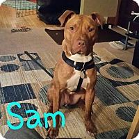 Adopt A Pet :: Sam - Toledo, OH