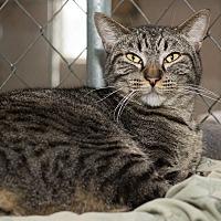 Adopt A Pet :: Sweetie Pie - Fallbrook, CA
