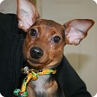 Adopt A Pet :: Sasha & Malia - Canoga Park, CA