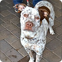 Adopt A Pet :: Aidan-Courtesy Post - Phoenix, AZ