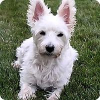Adopt A Pet :: Toby - GARRETT, IN