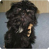 Adopt A Pet :: Licorice and Lollipop, - Antioch, IL