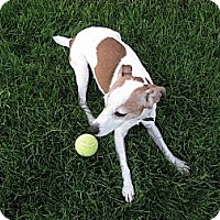 Adopt A Pet :: JACQUELYN - Scottsdale, AZ