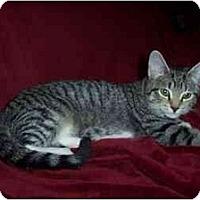 Adopt A Pet :: Tony - Portland, ME