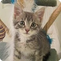 Adopt A Pet :: Artie - Arlington, VA