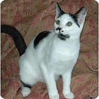 Adopt A Pet :: Sugar Bear - Chula Vista, CA