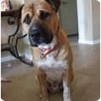 Adopt A Pet :: Raja - Only $55 adoption fee! - Litchfield Park, AZ