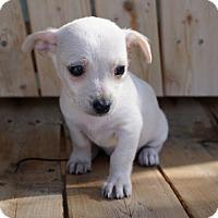 Adopt A Pet :: Winter - La Habra Heights, CA
