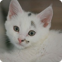 Adopt A Pet :: Haylee - Canoga Park, CA