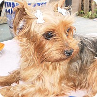 Adopt A Pet :: Molly - Ft Myers, FL