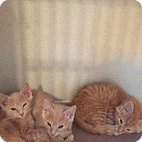 Adopt A Pet :: SLY aka Koji - Hamilton, NJ