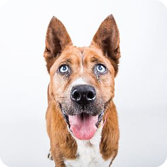 Terrier (Unknown Type, Medium) Mix Dog for adoption in Adrian, Michigan - Yosemite