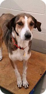 Hound (Unknown Type) Mix Dog for adoption in Lexington, Kentucky - Addie