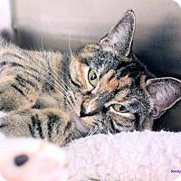 Adopt A Pet :: Katrina - Paris, ME