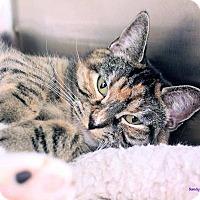Adopt A Pet :: Katrina - Paris, ME