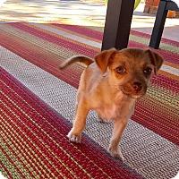 Adopt A Pet :: Madlyn: Adoption Pending - Astoria, NY
