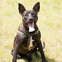 Adopt A Pet :: Shadow - Key Biscayne, FL