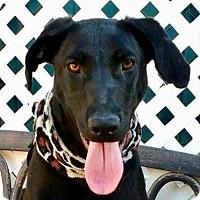 Adopt A Pet :: AZALIA - Santa Monica, CA