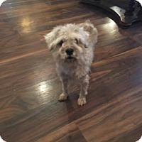 Adopt A Pet :: Razzy - Boerne, TX