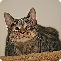 Adopt A Pet :: Ling - Trevose, PA