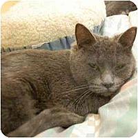 Adopt A Pet :: Nancy - Denver, CO