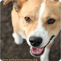 Terrier (Unknown Type, Medium) Mix Dog for adoption in Garland, Texas - Daddy Jack