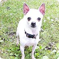 Adopt A Pet :: Buffy - Mocksville, NC