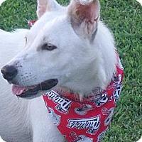 Adopt A Pet :: Lily - Glastonbury, CT